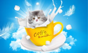 Reasons For Cat Incontinence And How To Treat It With Cat