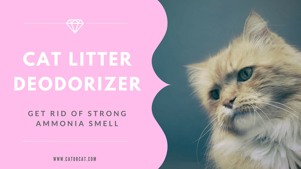 Cat Litter Deodorizer – If you Can't Get Rid of Strong Ammonia Smell?