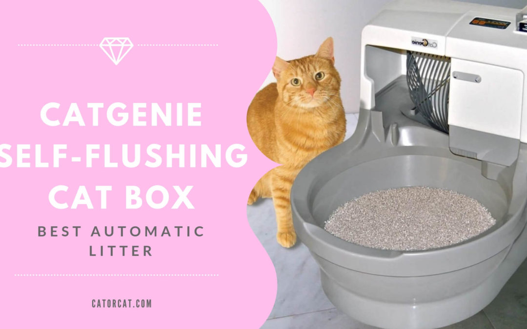 CatGenie Self-Flushing Cat Box; Best Automatic Litter