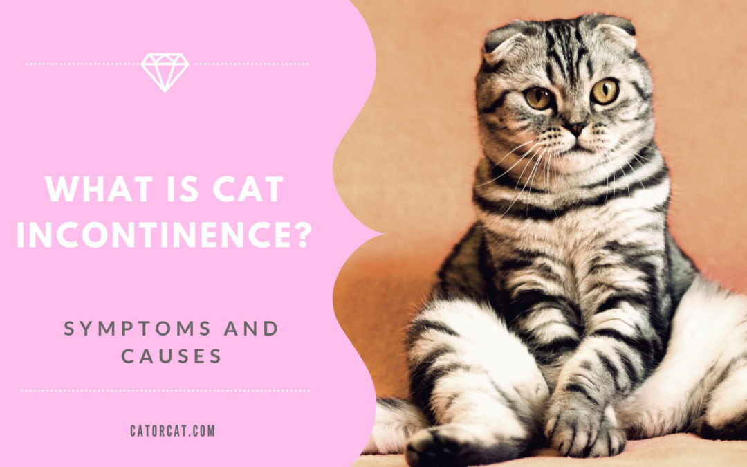 What is Cat Incontinence & How To Treat it?!