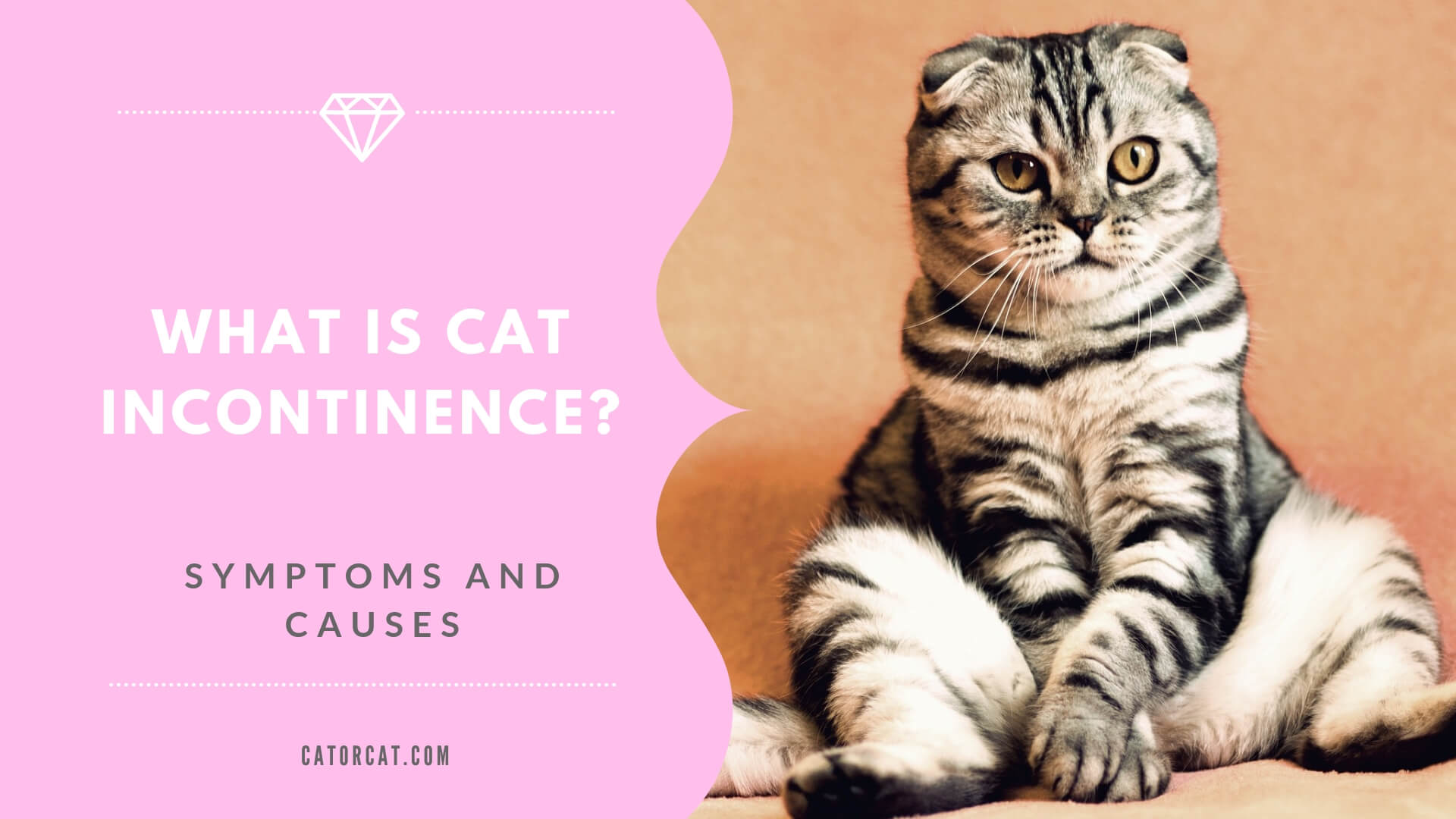 Cat Incontinence