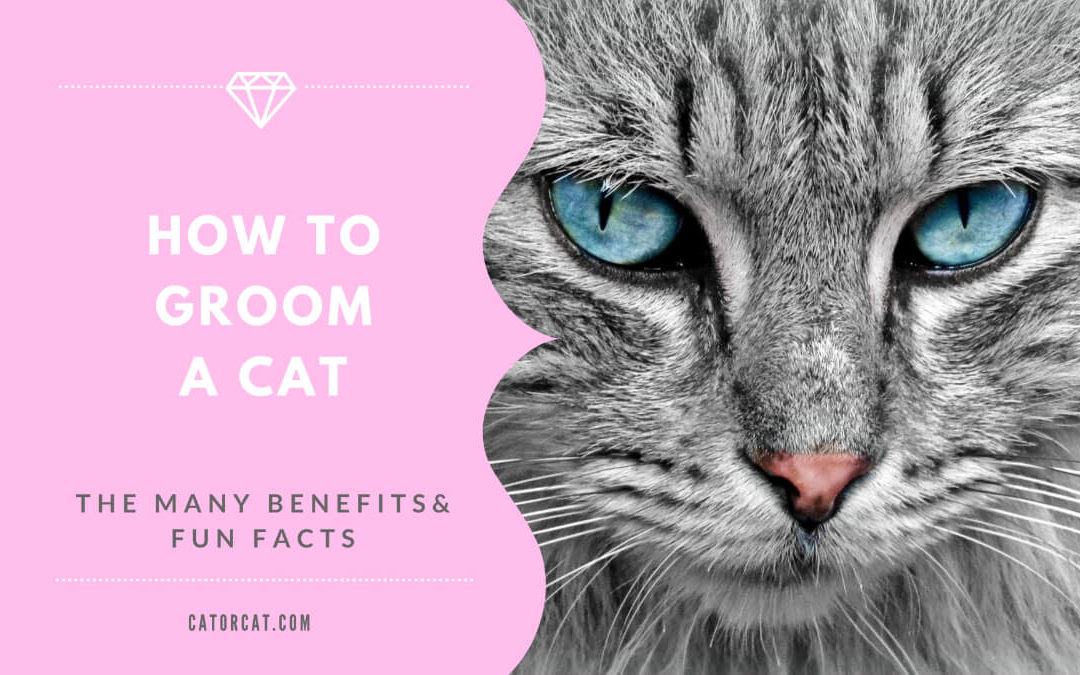 Cat Grooming Tips – How To Groom Your Cat At Home