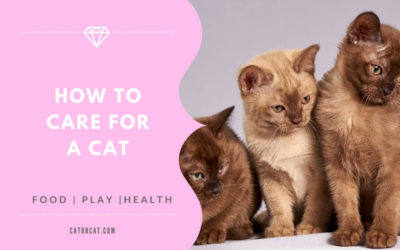 How To Take Care Of A Cat – 101 Guide