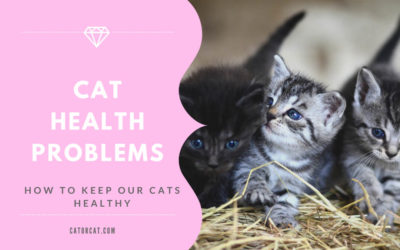 Cat Health Problems – How To Keep Our Cats Healthy