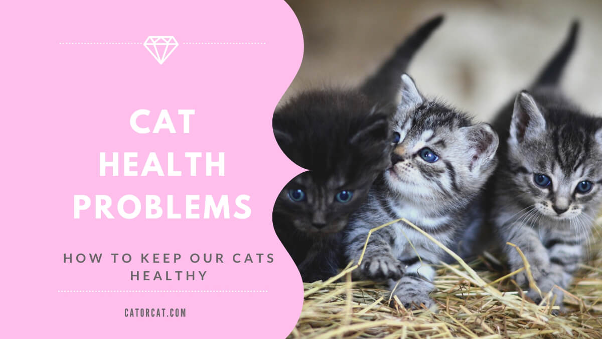cat illnesses symptoms