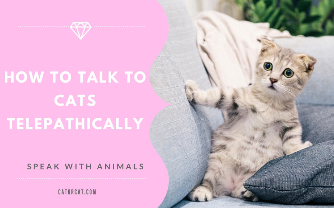 How to Talk to Cats Telepathically