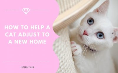 How To Help a Cat Adjust To a New Home
