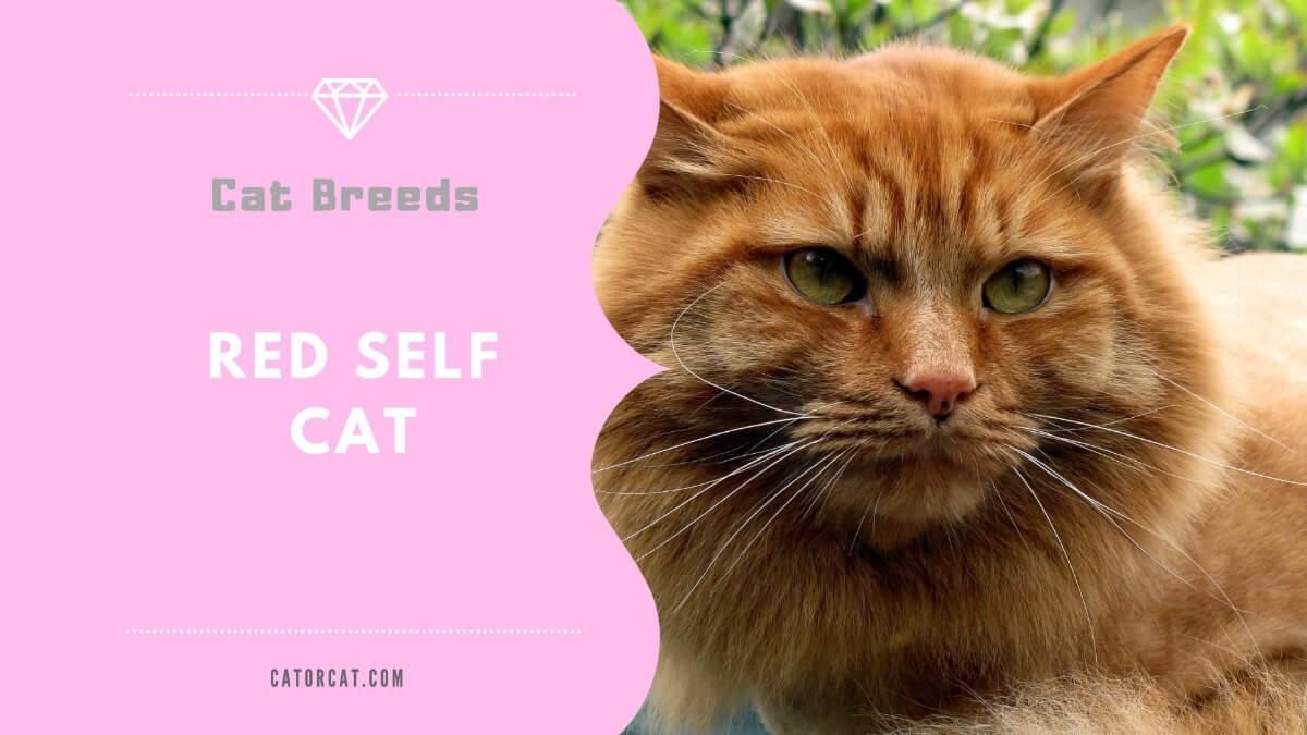 red self cat