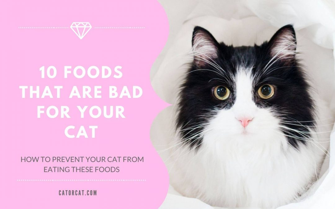 10 Foods That Are Bad For Your Cat