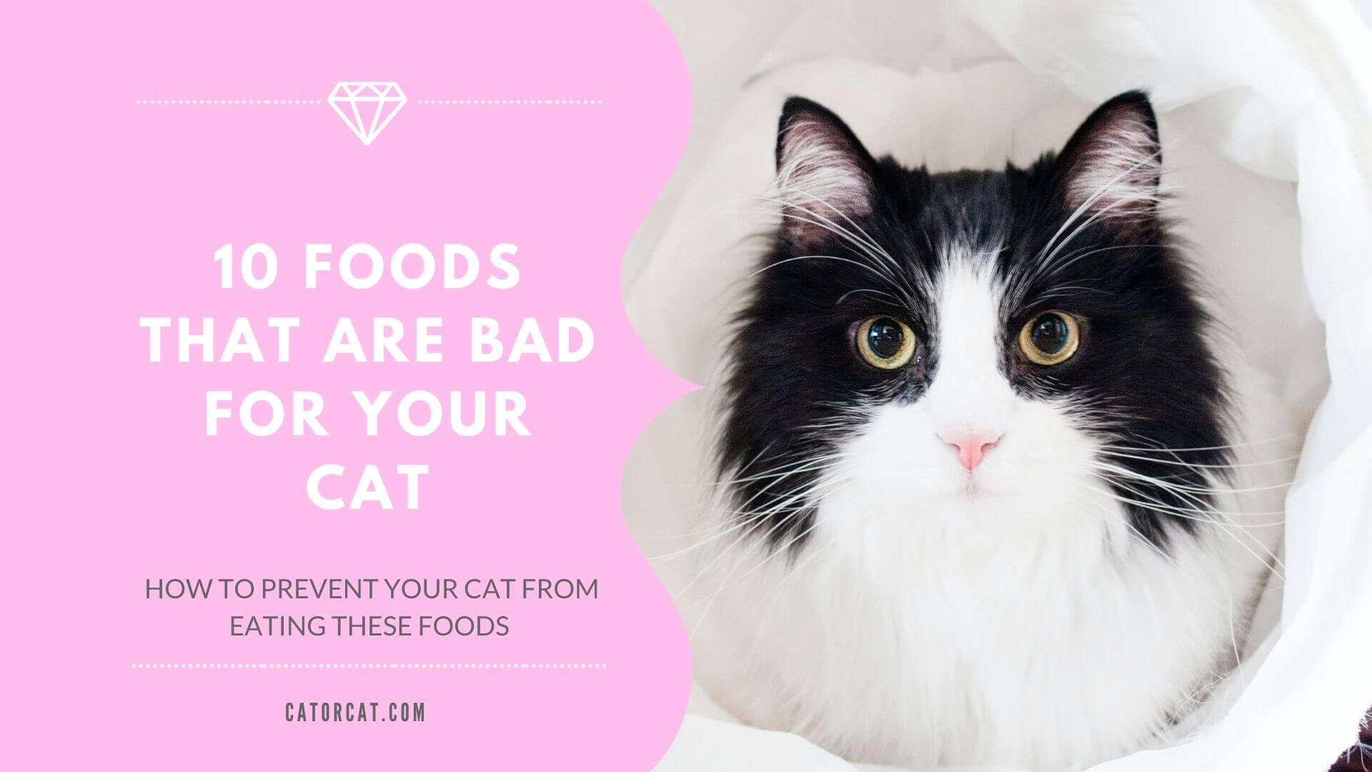 what foods are bad for cats