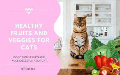Can Cats Eat Fruit and Vegetables?