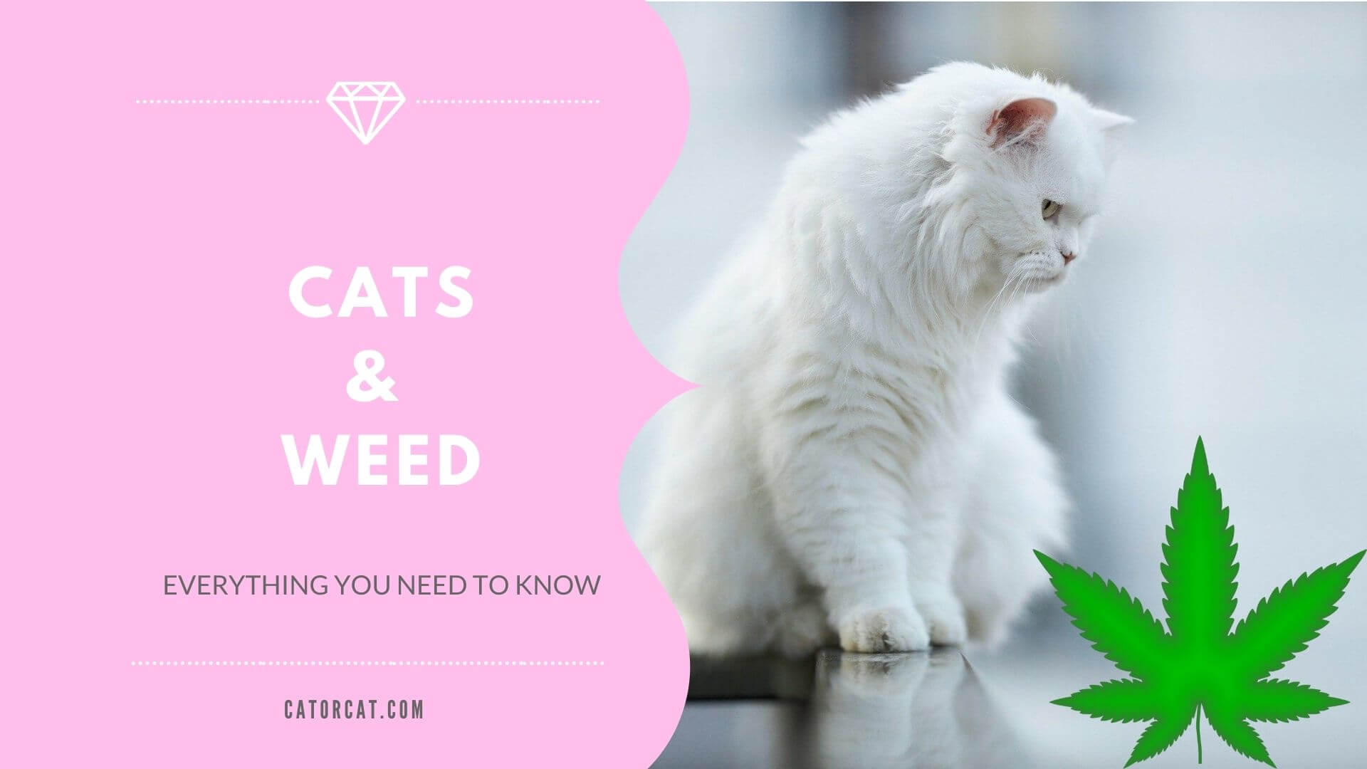 cats and weed