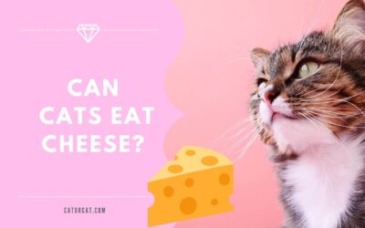 Can Cats Eat Cheese? A Full Guide