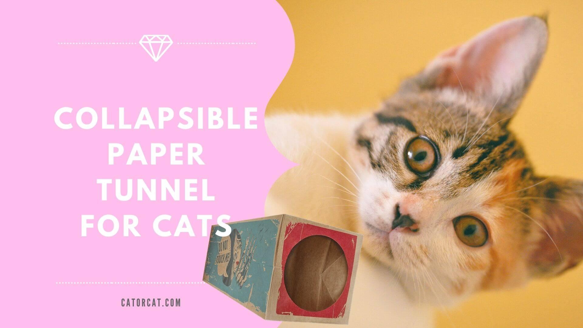 best cardboard cat tunnel