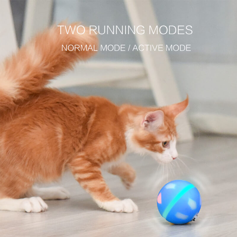 best jumping cat toy