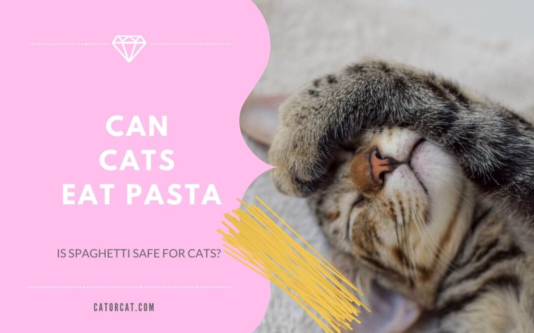 Can Cats Eat Pasta? Is Spaghetti Safe For Cats?