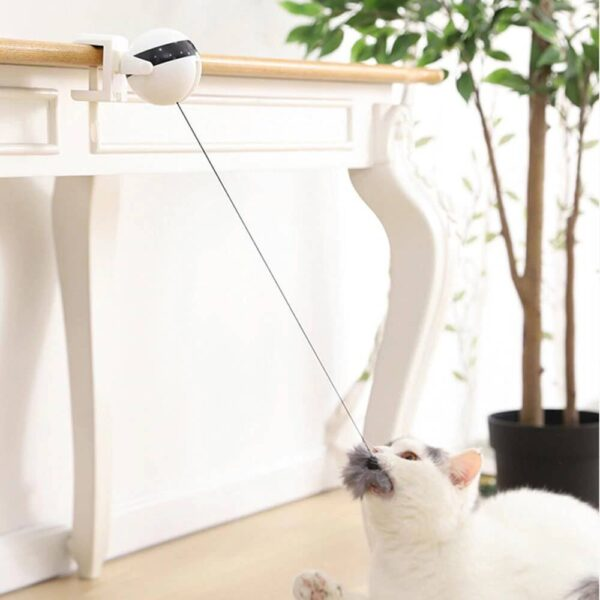 electric yoyo cat