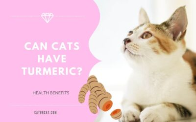 Can Cats Have Turmeric?