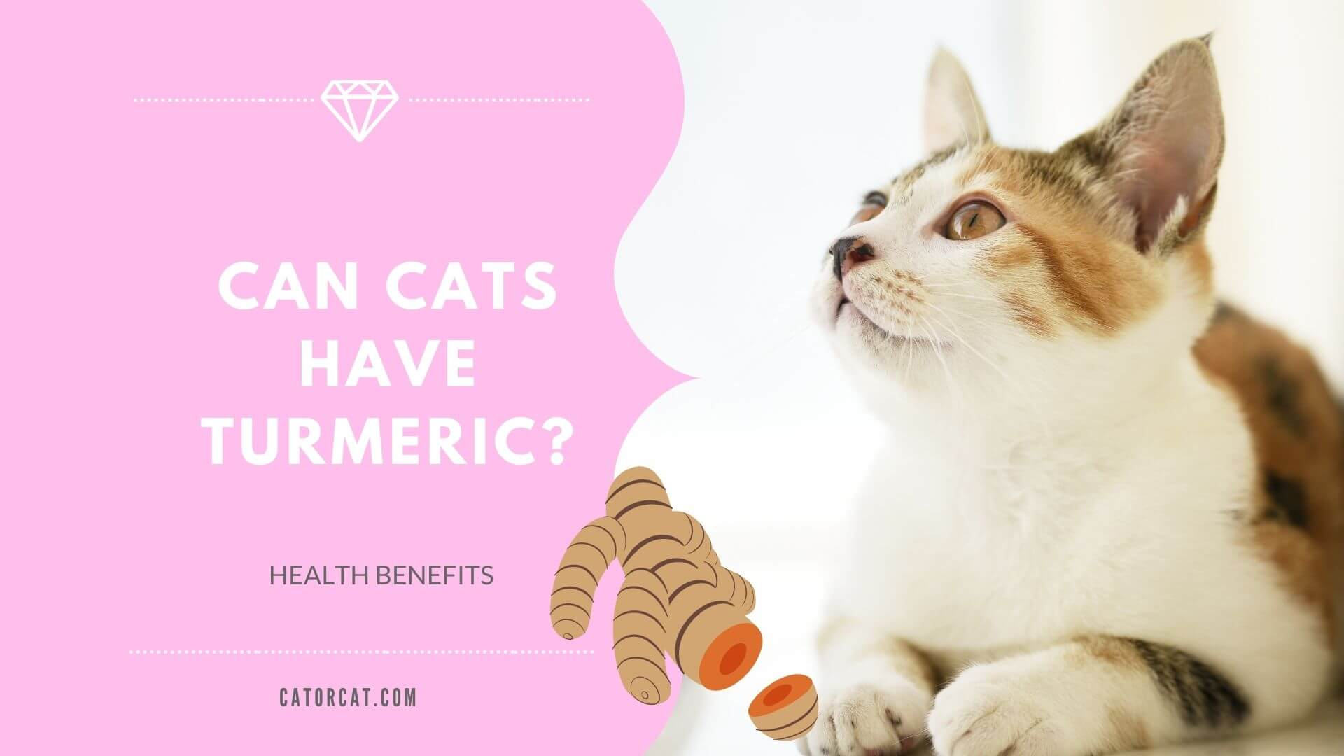 is turmeric safe for cats