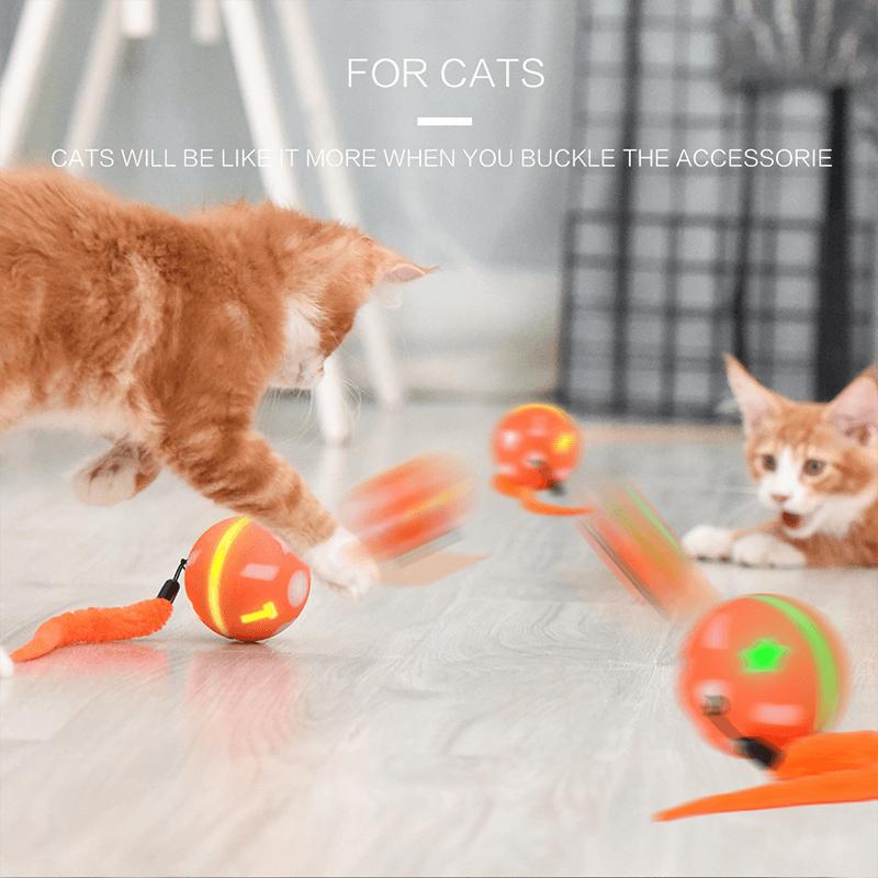 pet cat toy