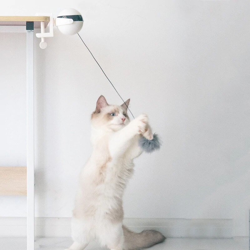 self moving yoyo cat toy