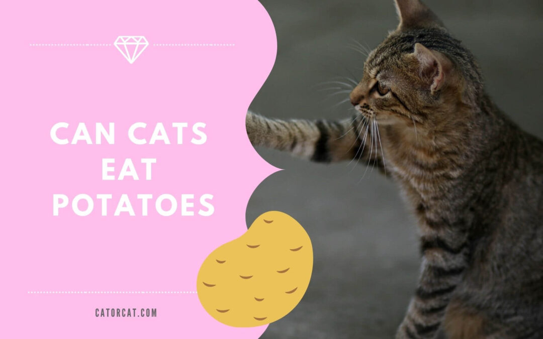Can Cats Eat Potatoes? Are They Healthy And Safe?