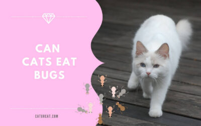 Is It Okay for Cats to Eat Bugs?