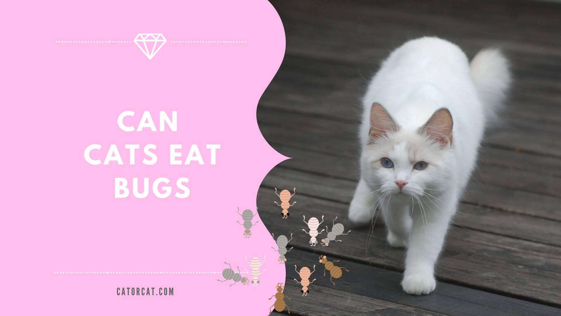can cats eat bugs