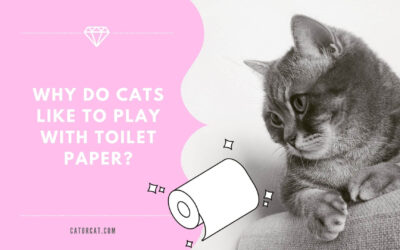 Why Do Cats Like to Play with Toilet Paper?