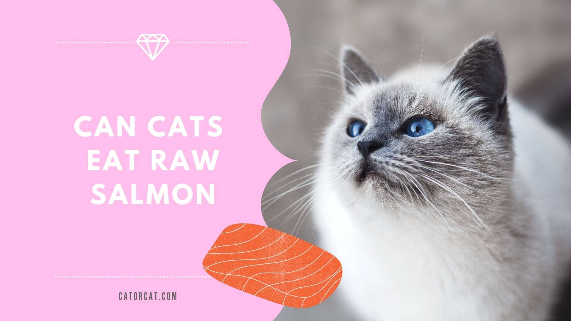 Can cats eat raw salmon
