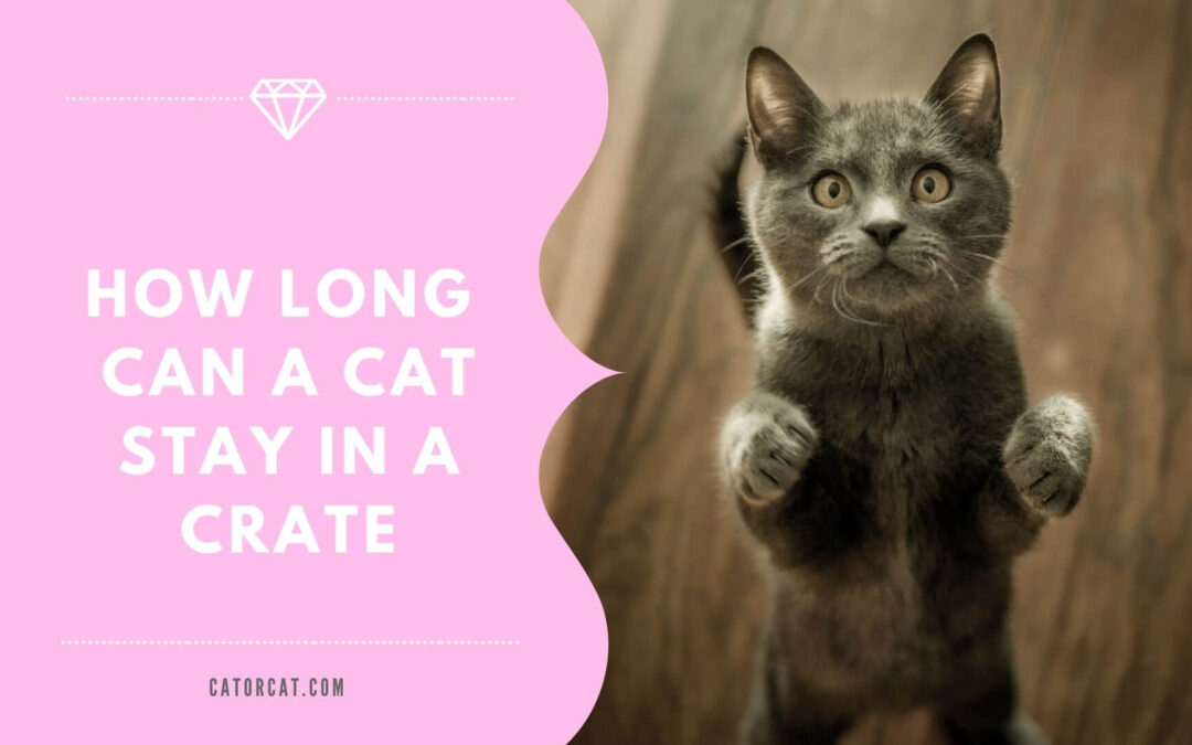 How long can a cat stay in a crate?