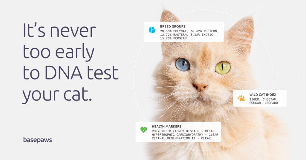 cat dna health test