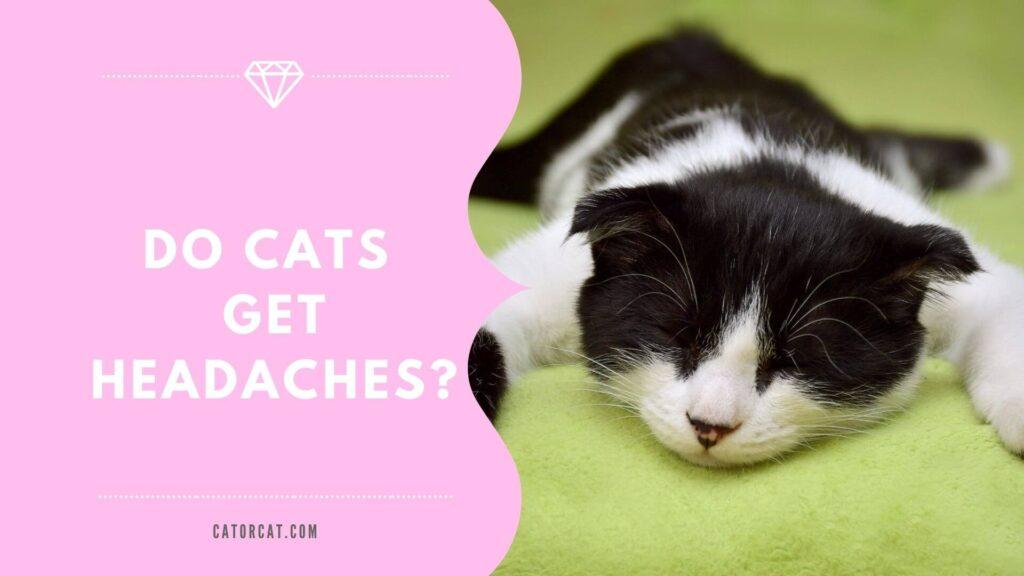 do cats get headaches like humans