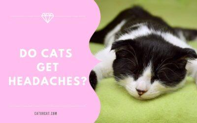 Guide: Do Cats Get Headaches?